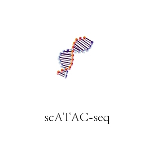 大同scATAC-seq